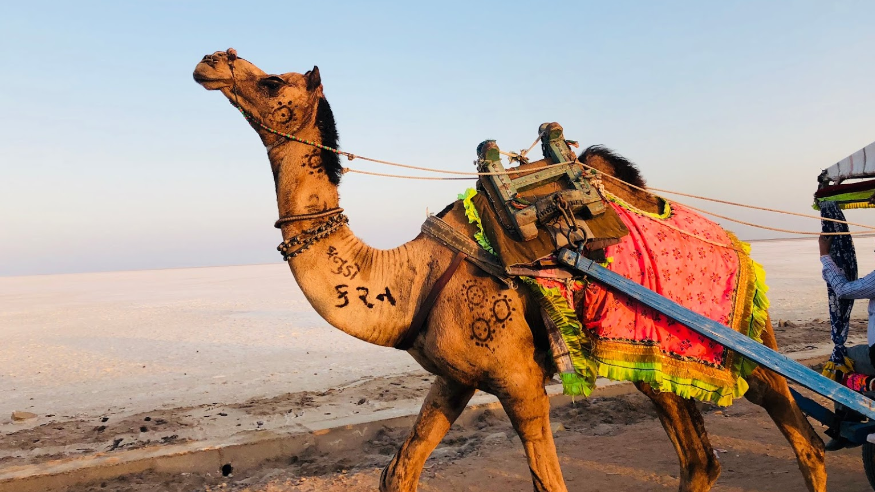 Great Rann of Kutch, Gujarat - 20 must visit places in India