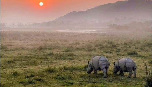 Kaziranga National Park, Assam - 20 must visit places in India
