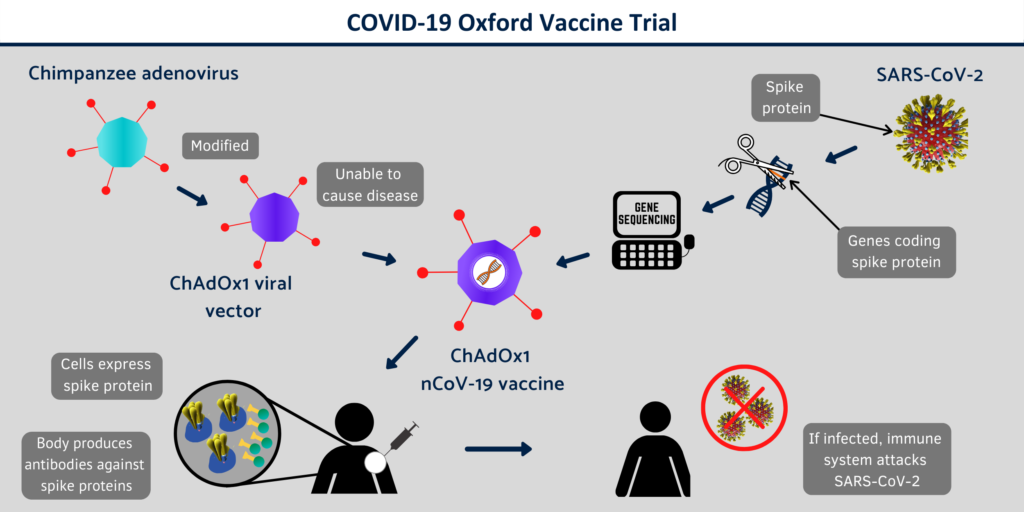 Oxford vaccine development and phase 1 clinicals