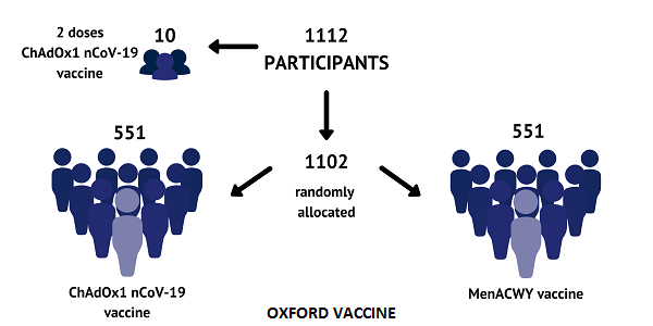 Oxford vaccine phase 2/3 clinical trials